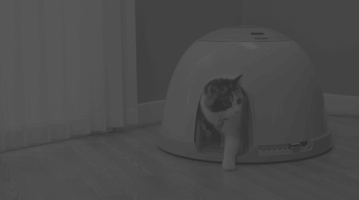 Feed Safe Cat Feeder