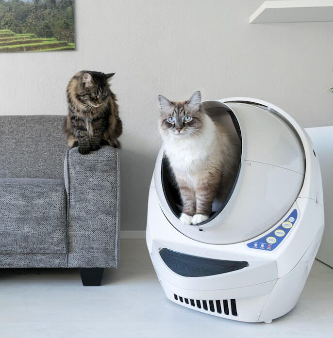 Territorial Cats Reduce The Number Of Litter Bo In Your House