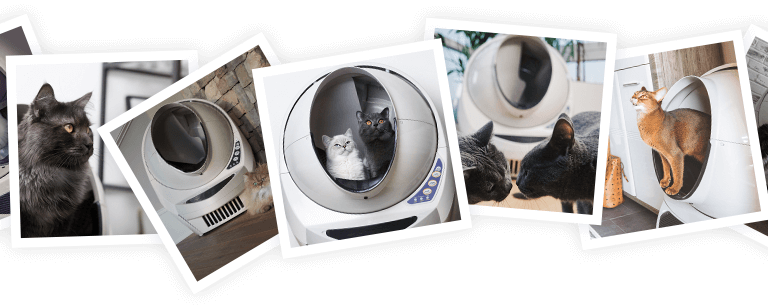 Litter-Robot cat influencer photo collage