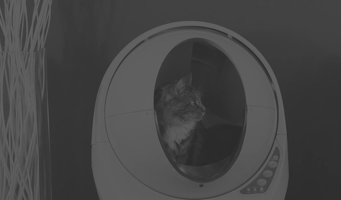 Maine Coon cat Litter-Robot user