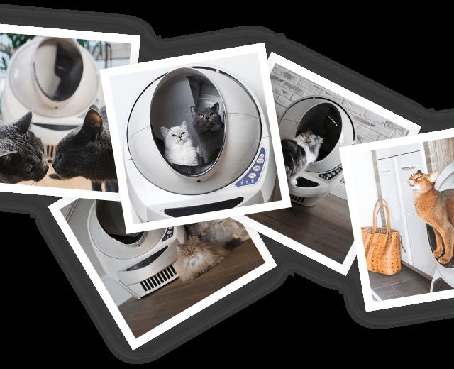 Litter-Robot cat influencer photo collage